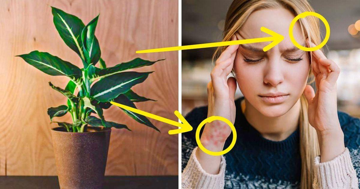 10 Plantes d'intérieur qui nuisent petit à petit à ta santé