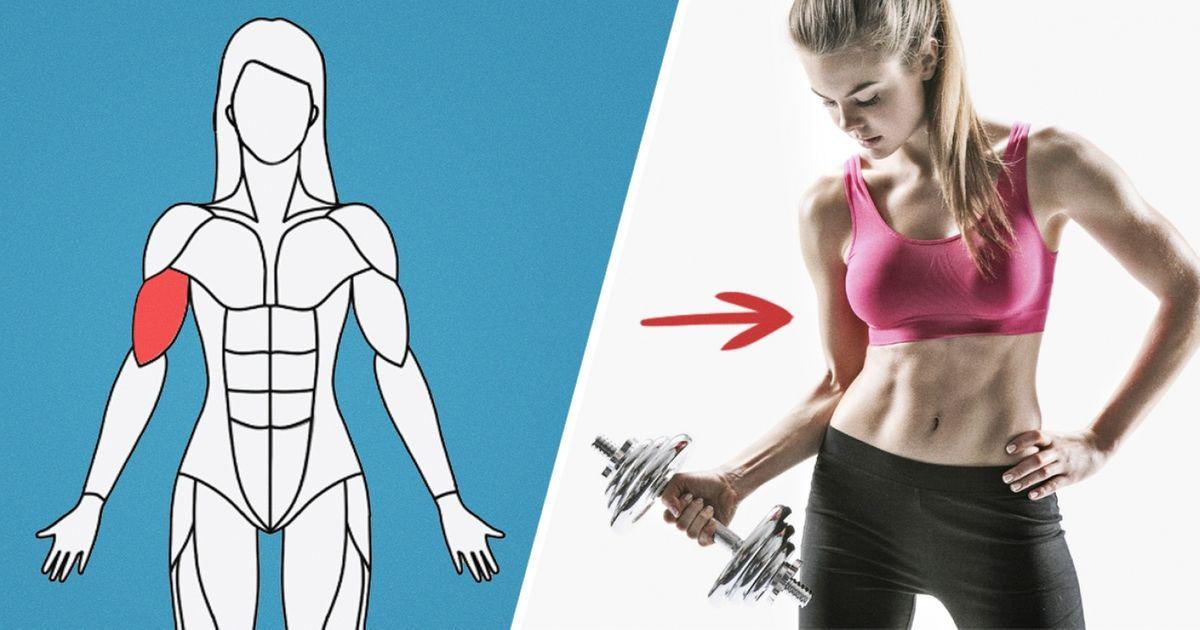 Cesite Internet tepropose unprogramme d'exercices pour chaque groupe demuscles deton corps