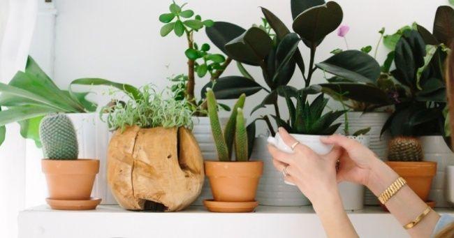 6Idées pour mettre duvert dans les maisons sans jardin niterrasse