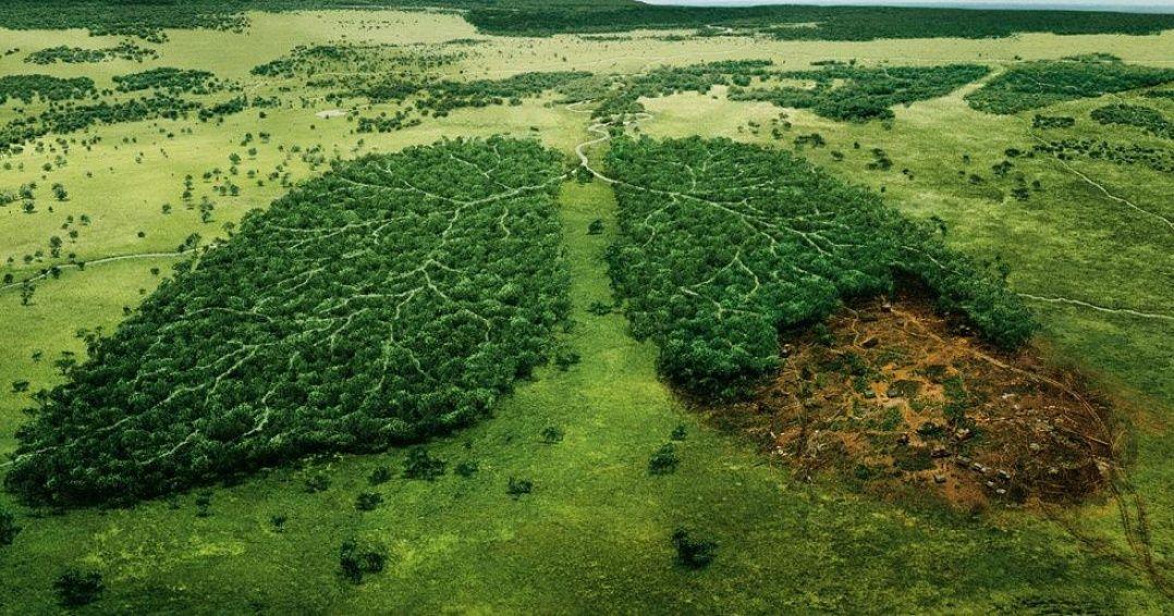 LaNorvège est lepremier pays àbannir ladéforestation !