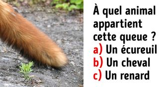 Test : devine à quel animal appartient chaque queue