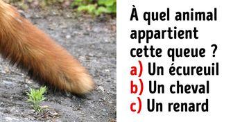 Test : devine à quel animal appartient chaque queue