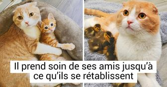 Un petit chat sauvé d'une grave blessure est devenu infirmier pour animaux