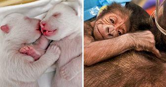 18 Bébés animaux qui sont totalement craquants dès leur naissance