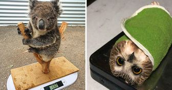 17 photos qui montrent comment les soigneurs animaliers s'y prennent pour peser leurs petits patients
