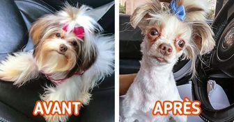 20 Propriétaires de chiens qui ont eu un canidé complètement différent après le toilettage