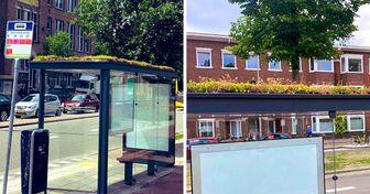 Aux Pays-Bas, des fleurs ont été plantées sur 320 arrêts de bus pour aider à sauver les abeilles