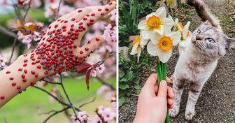 Les internautes ont partagé des photos qui montrent à quoi ressemble le printemps dans le monde entier