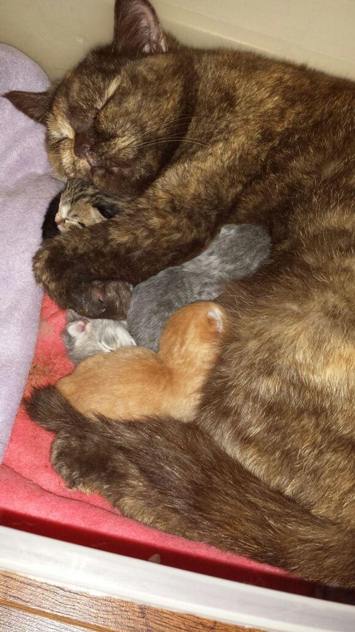 Ces 20 mamans animales nous montrent ce qu'est la parentalité