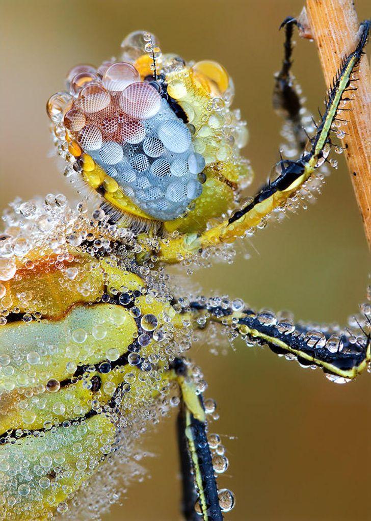 25 Photos fascinantes prises par un photographe allemand qui réussit à  retranscrire la beauté des insectes