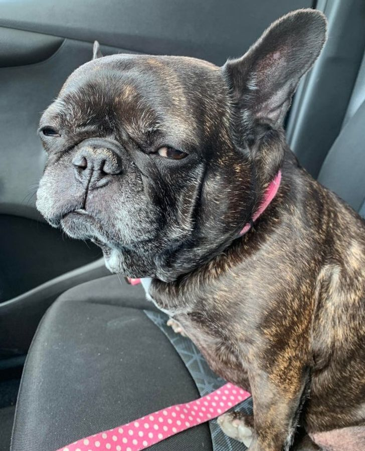30 Photos qui prouvent que ta vie ne sera jamais triste si tu as un bulldog