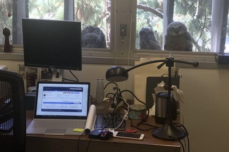 19 Preuves que si tu t'ennuies au bureau, c'est que tu travailles au mauvais endroit
