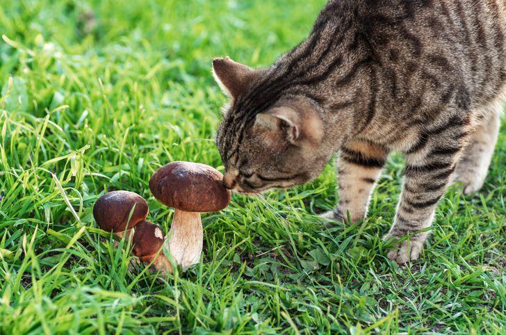 10 Aliments que tu ne devrais pas donner à ton chat, même s'il te fait les yeux doux