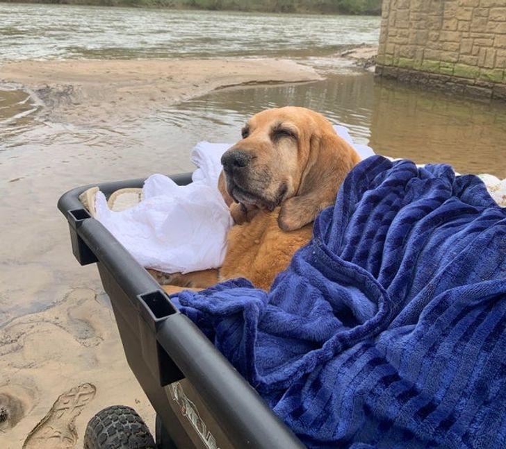 20+ Photos de chiens âgés qui prouvent que l'amour ne s'arrête pas à des chiffres
