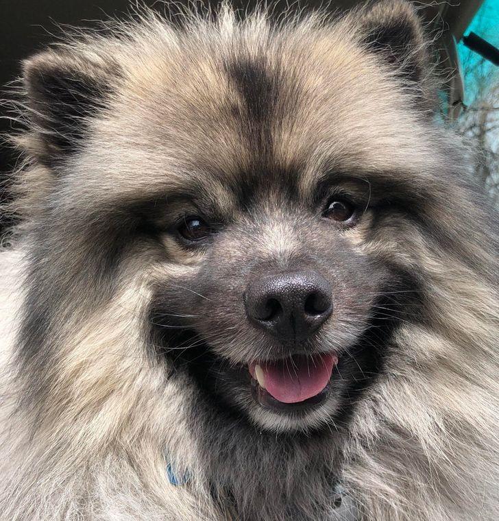20+ Races de chiens qui sont de vraies peluches et qui vont te donner une bonne dose d'amour