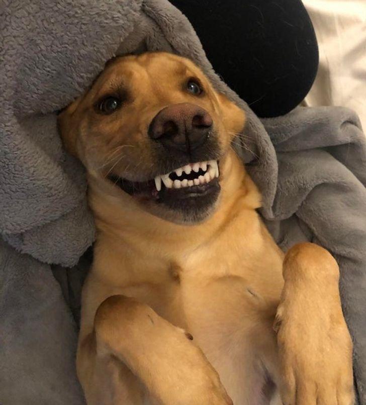 18 Animaux qui te donneront le sourire pour toute la journée
